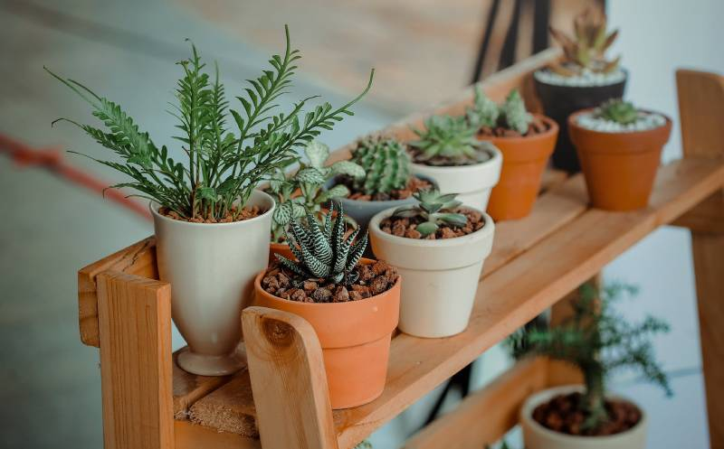 Main-indoorhouse-plants