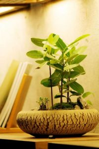 bonsai-potted-plants-fresh-the-party